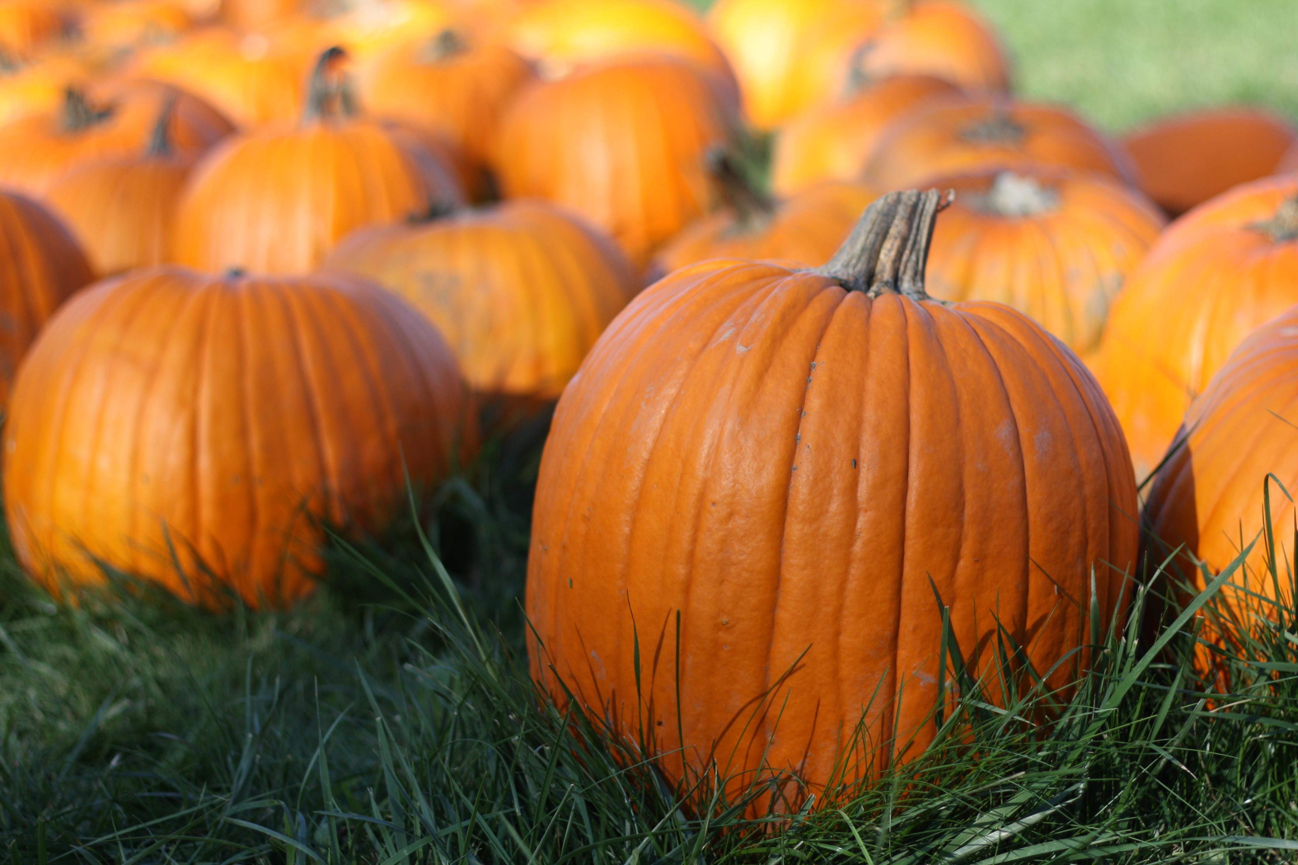 October Pumpkin Round-Up | The Gourmand Mom